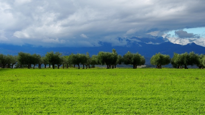 Olive groves and mountains Casale Centurione