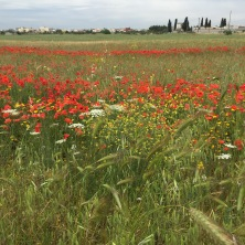 Riding to Martana through fields of spring flowers